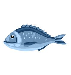 dorada fish isolated of seafood on vector image