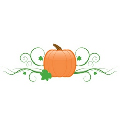 Pumpkin and vines vector