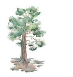 pine tree on a white background Watercolor Sketch vector image
