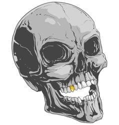 Grey skull vector image
