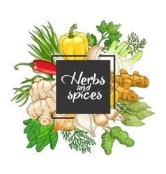 Vegetable square design with spices vector