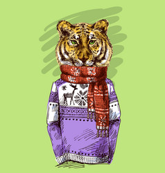 Tiger in knitted sweater vector