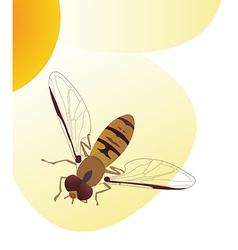 bee v vector image vector image