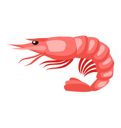 cooked tiger shrimp isolated of vector image