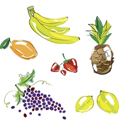 hand sketched fruit vector image