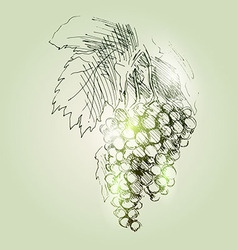 Tassels grapes vector
