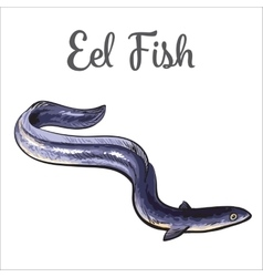 Live eel fish isolated on white background vector