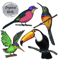 Collection of sketch exotic tropical birds vector