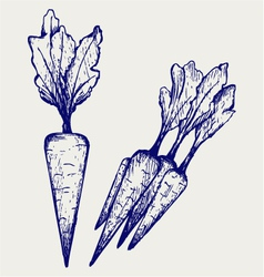 Carrot vegetable with leaves vector image
