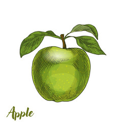 green apple with leaves vector image
