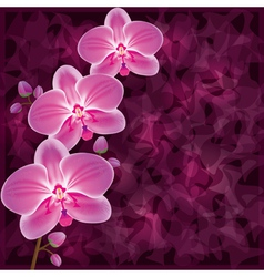 Background with flower orchid Invitation or vector image vector image
