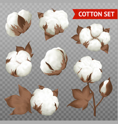 cotton plant transparent realistic set vector image vector image