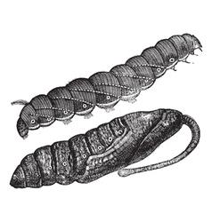 Larva vintage engraving vector