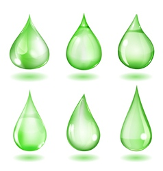 Opaque green drops vector