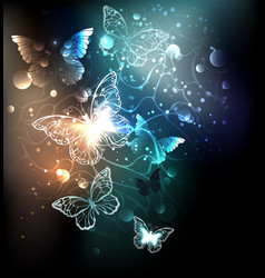 bright night butterflies vector image