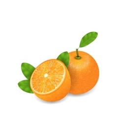 Photo Realistic Set Orange Fruits vector image vector image