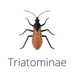 Triatominae skin parasite insect bug vector