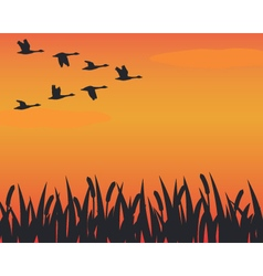 Flock of silhouette geese flying over marsh vector