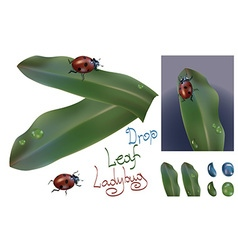 Ladybug with water drop and leaf vector