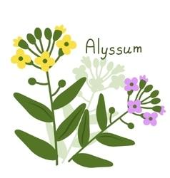 Isolated alyssum plant vector