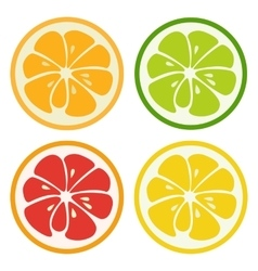 Kinds of citrus fruits vector image