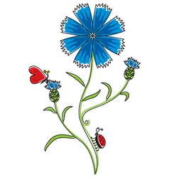 knapweed vector image