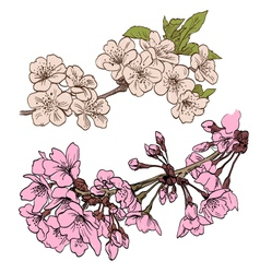 Spring flowers isolated vector