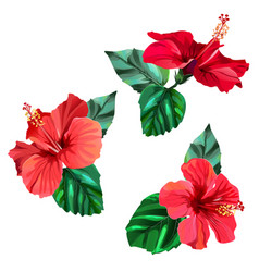 Three beautiful red hibiscus flowers with leaves vector