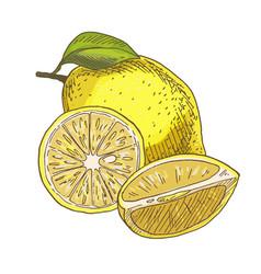 lemon with leaf half of the fruit vector image