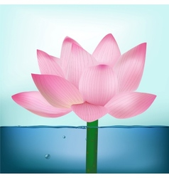 Photo-Realistic Lotus Flower In Water vector image vector image
