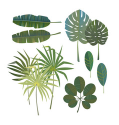 set of tropical palm leaves vector image vector image