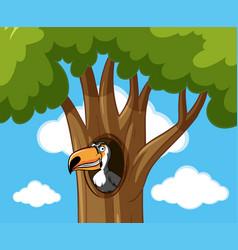 Toucan bird in hallow tree vector