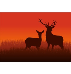 Deer and doe vector