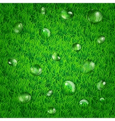 Background with grass and water drops vector image vector image
