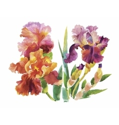 Flower of iris drawing by watercolor hand drawn vector