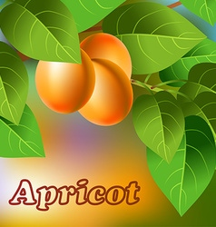 Orange juicy sweet apricots on a branch for your vector