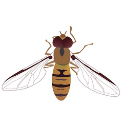 bee1v vector image