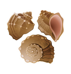 set of graphic seashells vector image