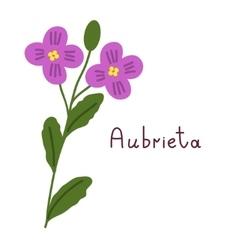 Isolated aubrieta plant vector