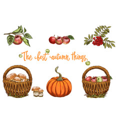 set of autumn objects mushrooms apple pumpkin vector image vector image