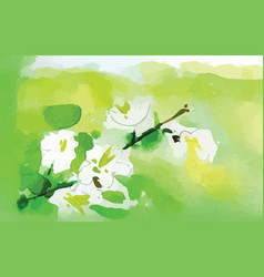 Watercolor jasmine flower vector