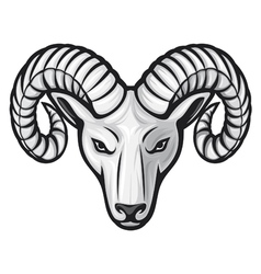 head of the ram - ram head vector image