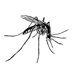 Hand sketch mosquito vector image