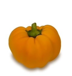 Photo realistic pumpkin vegetable vector