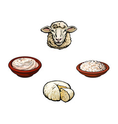 sketch sheep head cottage cheese sour cream vector image