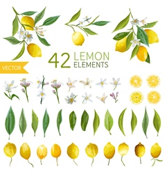 Vintage Lemons Flowers and Leaves Bouquetes vector image vector image