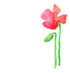 Watercolor poppy isolated on white vector