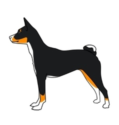Basenji dog tricolor vector