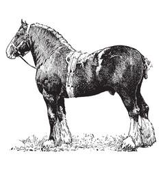 Draft horse vintage vector