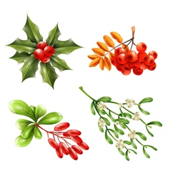 Christmas berry branches set vector
